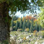 Bialowieska nationalpark – europæisk urskov